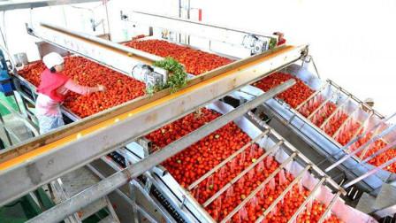 番茄酱真的是番茄做的吗?镜头实拍生产过程,看完有何感想呢