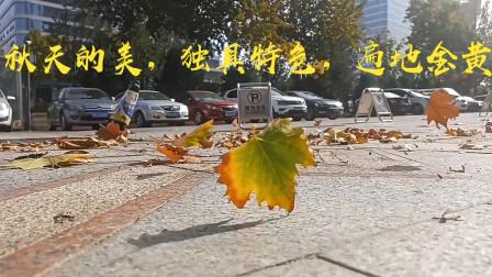 小伙拍摄秋风扫落叶的景象,记录秋天的美景,诉说秋天的故事