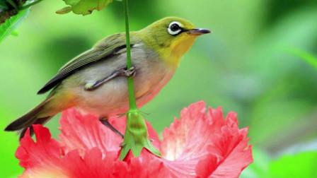 十二星座最喜欢哪种鸟,你认识几种呢?