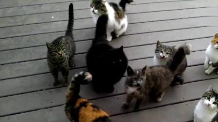 街头流浪猫超级可爱,双腿站立求摸,真想带它们回家