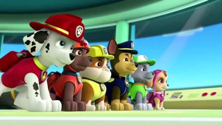 汪汪队立大功少儿动画片:狗狗们都想拿到第一名,阿奇却说还有很多安全锥!