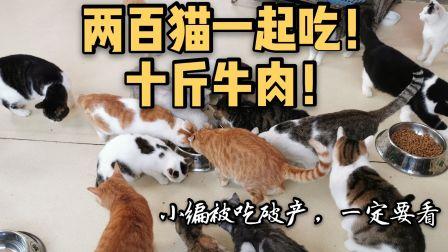 【百猫吃播】肉涨价啦,破产买十斤牛肉只够一只猫吃一口!!!一定要看!真香!