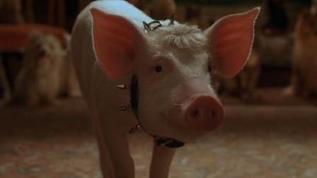 一部奇幻电影,厨师要用小猪做脆皮烤猪,却不知猪比他的本领还大