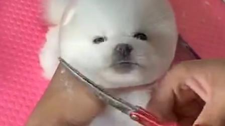 打扮一下我就是最萌的狗狗!