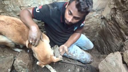 流浪狗在废墟中刨土,好心人上前帮忙,刨开土的那一刻让人感动