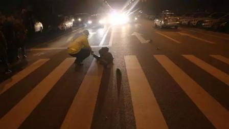 【重庆】男子驾车撞倒行人后逃逸 事后民警一问三不知