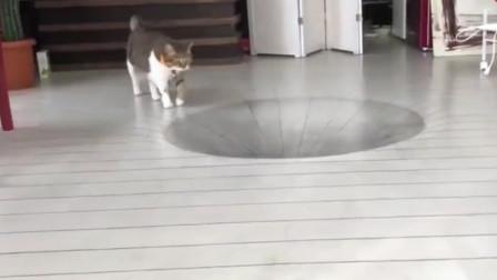 在地上画3D大坑骗猫,却被猫咪一秒破功,心疼铲屎官!