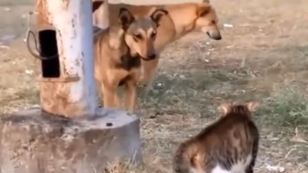 猫咪大战流浪狗,看这姿势,网友:八成是练过!