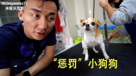 一只狗一生要花的钱有多少?