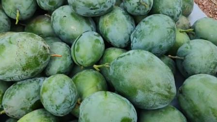 攀枝花的凯特芒果,不仅大还柔嫩,饱满多汁脆又甜,深受大家喜欢