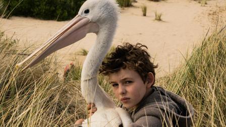 男孩收养了一只幼鸟,慢慢的却长成庞然大物,并且还救了父亲一命