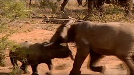 大象对战犀牛到底谁能赢,场面难得一见,结局让人意外