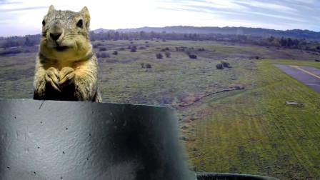 国外一只松鼠偷了一架无人机,开飞之后真相笑得我肚子疼!