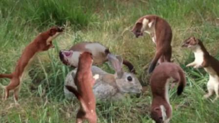 """黄大仙的""""邪门舞"""",兔子看完命没了,镜头揭开诡秘画面"""