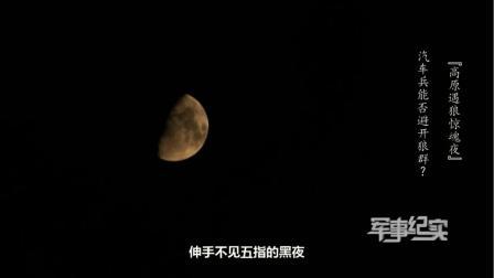 深夜,海拔5000米高原,汽车兵遭遇野狼