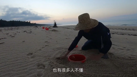 赶海小哥带4个小红桶来沙滩上布置陷阱,只为抓这种非常滋补的海货