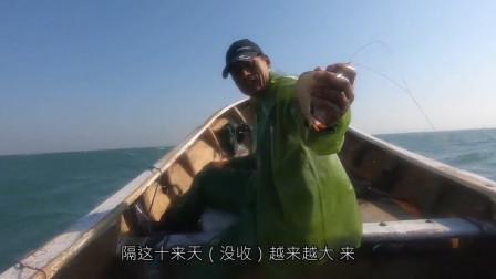 赶海大叔出海收虾网,捕获了16斤海虾和10几斤海鱼,卖了1600多块