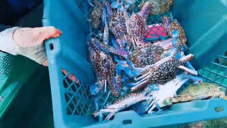赶海小妹出海收渔网,捕获了10几只螃蟹和10几条鱼,小赚好几百块