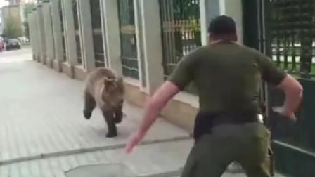 棕熊越狱出逃,被男子一脚踢到墙上,下一秒请憋住别笑