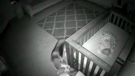 铲屎官发现自家狗狗总是在夜里来到宝宝房间  知道真相后非常感动
