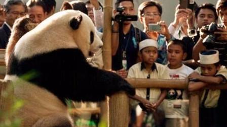 世界上最难租到大熊猫的国家,申请了20多年,总统开口都被拒绝
