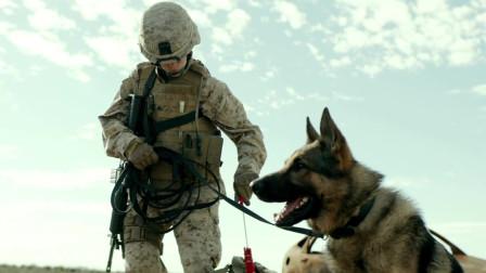 精彩现代战争片,美军深入伊拉克用军犬排爆,不料遭武装分子袭击