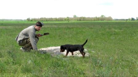 """男子用狗探路,一举端了狐狸的""""老巢"""",头一次见这种方法!"""