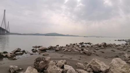 安庆望江龙潭大渡口中心洲发现长江江豚出水