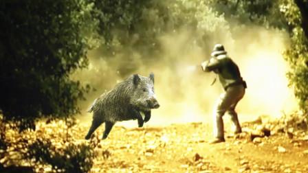 """5头让猎人头疼的野猪,一个比一个""""坚强""""!"""