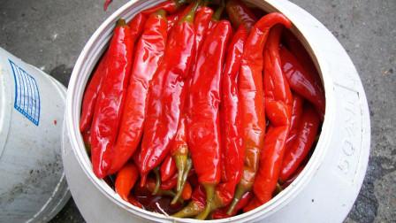 川菜中的泡椒酱,怎么才能做到色香味美?看厨子的详细制作