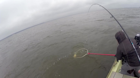 冒险 户外之钓鱼钓到鲤鱼