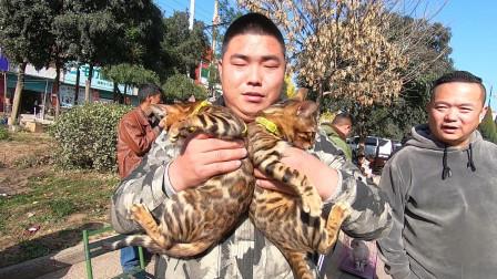 """农村狗市,价格不菲""""豹猫""""问得多买的少,都担心买回去喂不熟"""