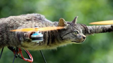 起飞了?盘点全球最奇葩四只猫,最后一只还有军衔?