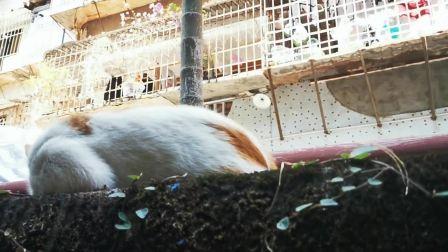 偷偷摸流浪猫最敏感的地方,猫咪的反应让人忍俊不禁!