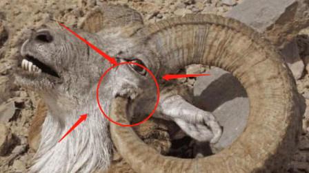 世界上最憋屈的动物,为了生存躲过无数天敌,结果却被自己杀害?