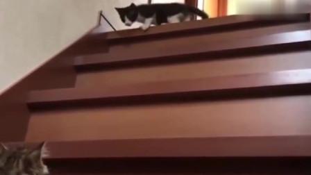 大猫鼓励小猫宝宝下楼梯,好有爱啊,看的我心里暖暖的!