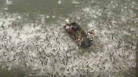美国人大面积清理亚洲鲤鱼,这场面太壮观了!佩服佩服