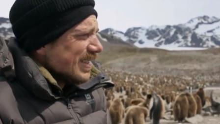 全球变暖影响极地动物!摄影师在南极哭了:这里很热!