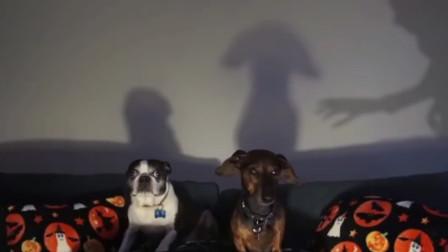 主人给狗狗看恐怖片,狗狗的反应让人笑得肚子疼,镜头记录全过程