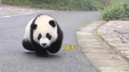 随风奔跑自由是方向!出了这个门我就是自由的大熊猫!