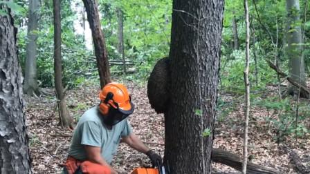 """大树上长了个""""大瘤子"""",大叔锯下来带回家,盘完效果惊艳了"""