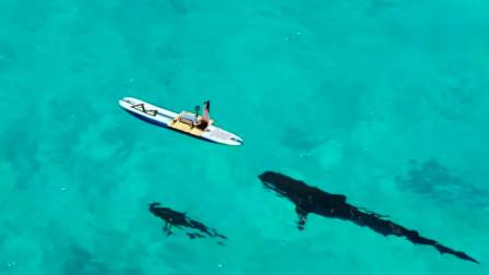 外国牛人作死测试,拿血液吸引鲨鱼,网友:下次试试食人鱼吧