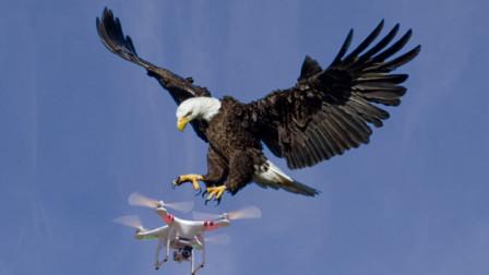 无人机正在航拍,一只老鹰突然飞过来,下一秒意外发生了!