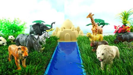 介绍草原上的食草和食肉动物