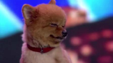 小伙带狗狗上台表演,杨幂被它吸粉,沈腾求抱抱!