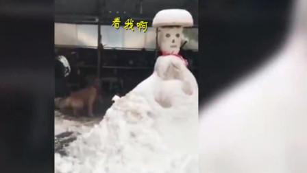 大雪中男子堆1米多高雪人,却被身后狗子抢镜