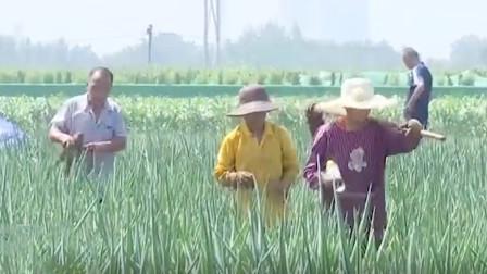 章丘突发特大暴雨,村民都纷纷扛起了锄头,自发保护起菜地