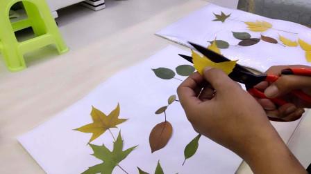 Vlog秋风扫落叶,男子收集多种树叶,动手制成精美树叶画