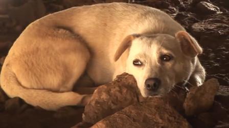 狗狗半夜不停狂叫,主人出门刚要打它才意识到,狗狗救了自己一命!