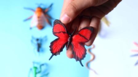 大家一起来认识各种昆虫吧有蜘蛛蜜蜂等等.mp4